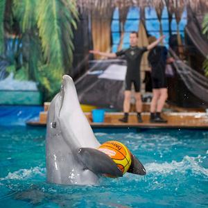 Дельфинарии, океанариумы Нижнекамска