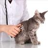 Ветеринарные клиники в Нижнекамске